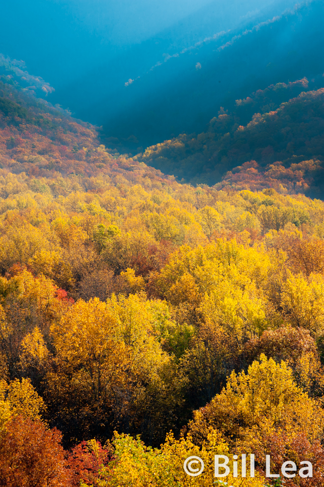 Fall colors below Bull Head Mountain - Great Smoky Mountains National Park